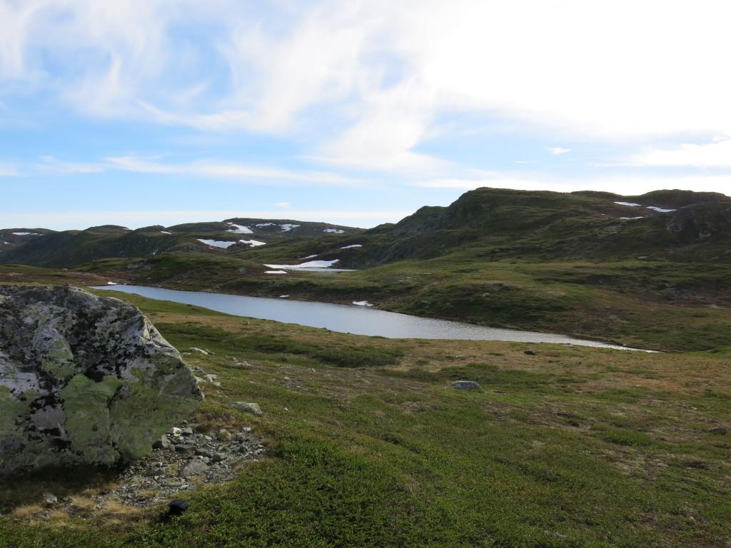 Grisetjern Foto Olav Sveinsson. Juni 2014
