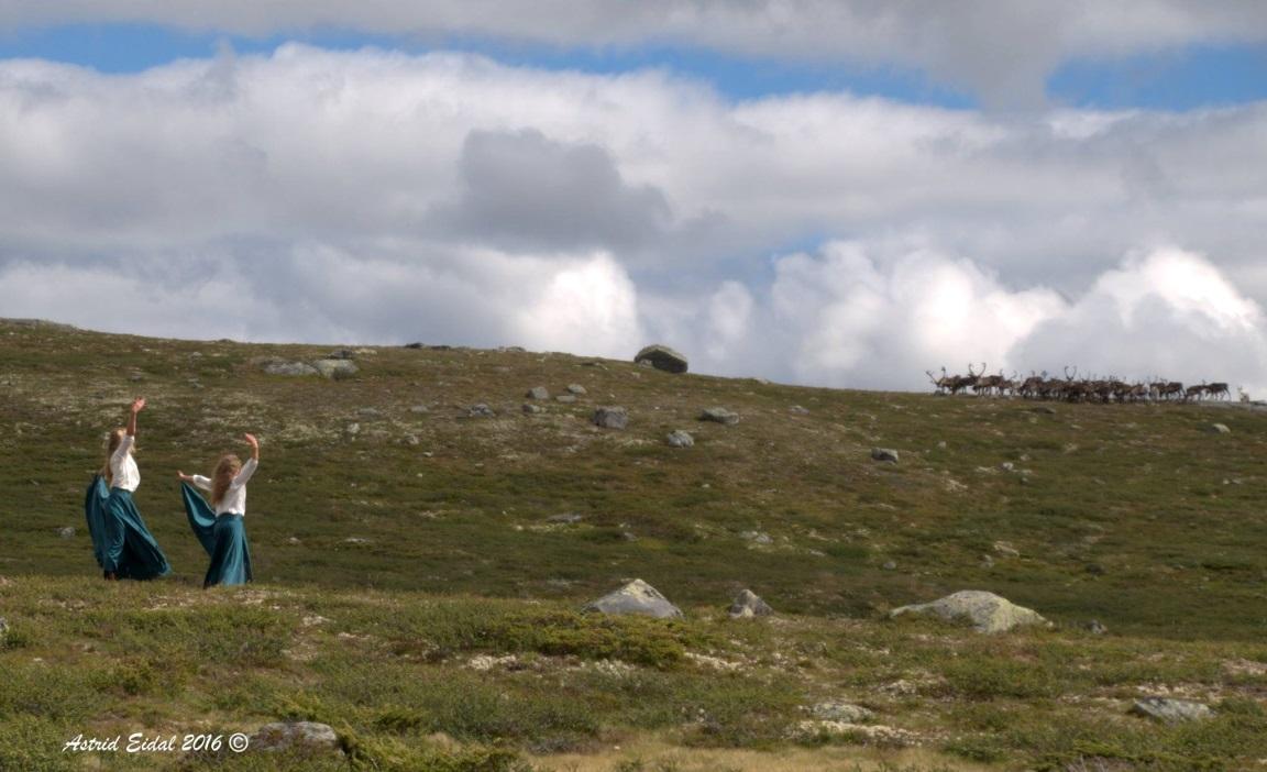 Reinsdyrflokken tok en pause i beitingen for å få med seg hulderdansen.