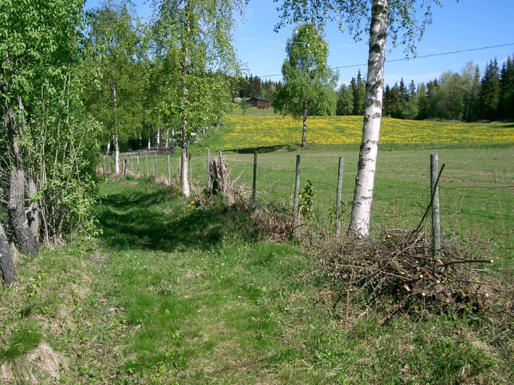 Øverste del av den nyrydda postvegen til Garnås