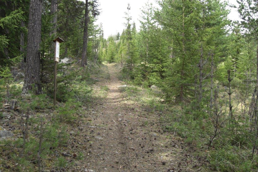 Infoskilt om skogen